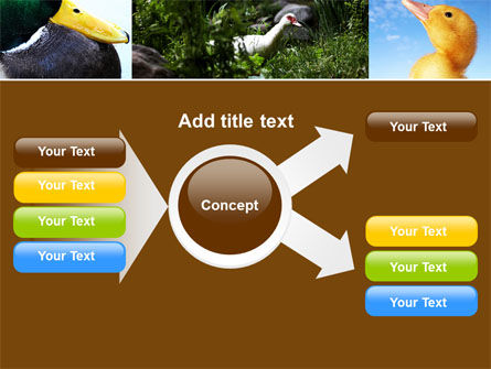 Duck PowerPoint Template Slide 14
