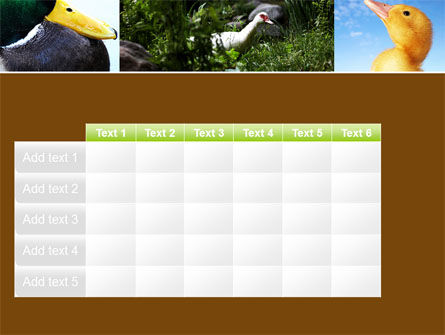 Duck PowerPoint Template Slide 15
