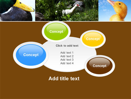 Duck PowerPoint Template Slide 16