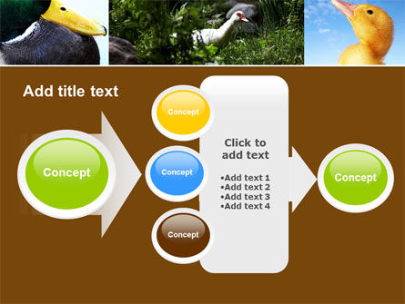 Duck PowerPoint Template Slide 17
