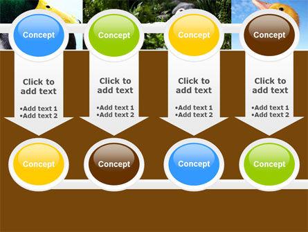 Duck PowerPoint Template Slide 18