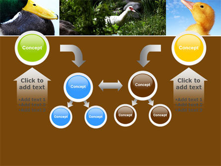 Duck PowerPoint Template Slide 19