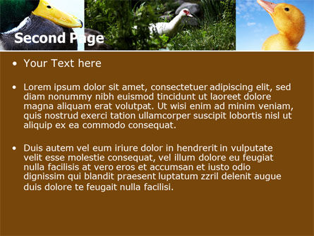 Duck PowerPoint Template, Slide 2, 05190, Agriculture — PoweredTemplate.com