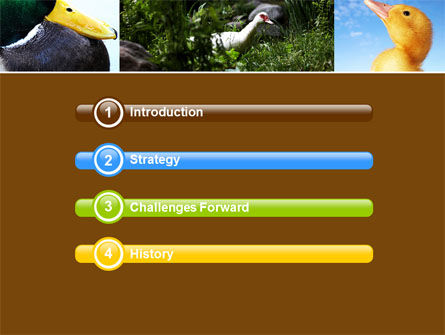 Duck PowerPoint Template, Slide 3, 05190, Agriculture — PoweredTemplate.com