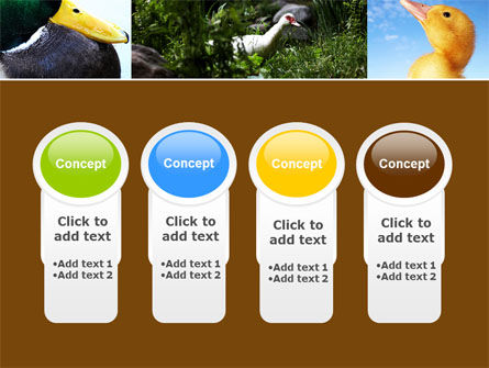 Duck PowerPoint Template Slide 5