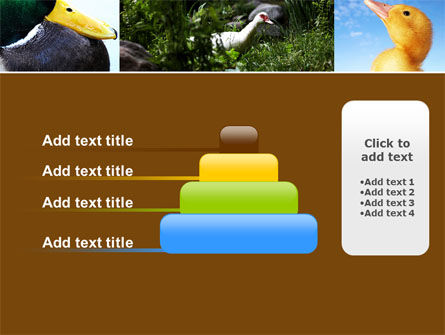 Duck PowerPoint Template Slide 8