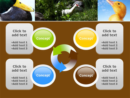 Duck PowerPoint Template Slide 9