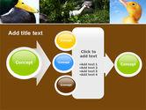 Duck PowerPoint Template#17
