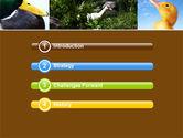 Duck PowerPoint Template#3