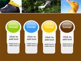 Duck PowerPoint Template#5