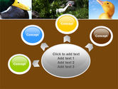 Duck PowerPoint Template#7