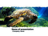 Animals and Pets: Sea Turtle PowerPoint Template #05237