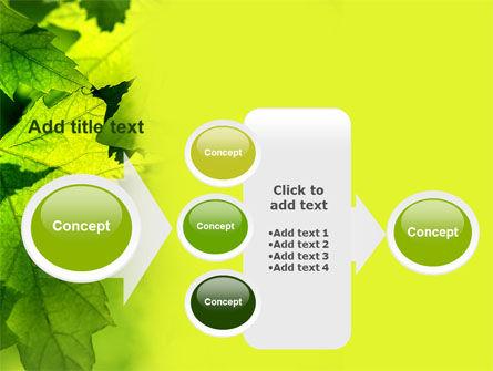 Maple PowerPoint Template Slide 17