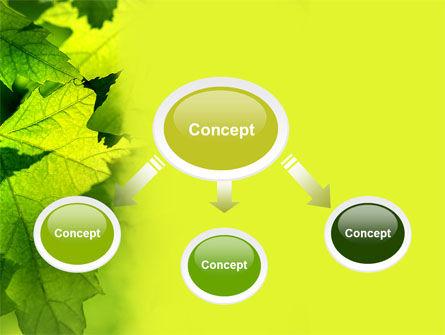 Maple PowerPoint Template, Slide 4, 05314, Nature & Environment — PoweredTemplate.com