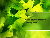 Nature & Environment: Maple PowerPoint Template #05314