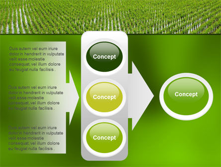 Rice Paddies PowerPoint Template Slide 11