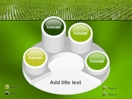 Rice Paddies PowerPoint Template Slide 12
