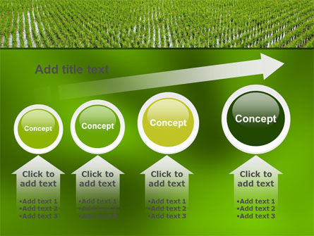 Rice Paddies PowerPoint Template Slide 13