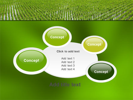 Rice Paddies PowerPoint Template Slide 16