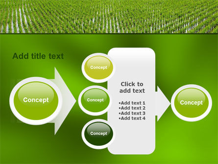 Rice Paddies PowerPoint Template Slide 17
