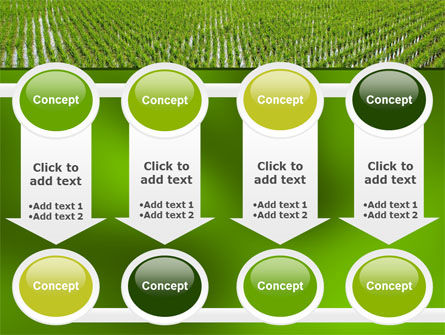 Rice Paddies PowerPoint Template Slide 18