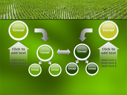 Rice Paddies PowerPoint Template Slide 19