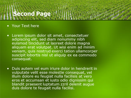 Rice Paddies PowerPoint Template Slide 2