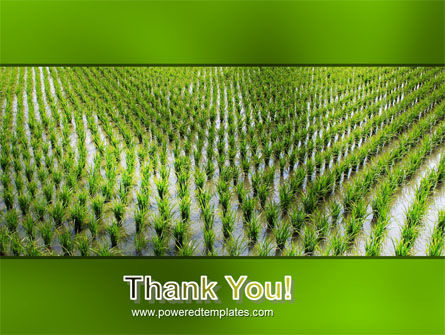 Rice Paddies PowerPoint Template Slide 20