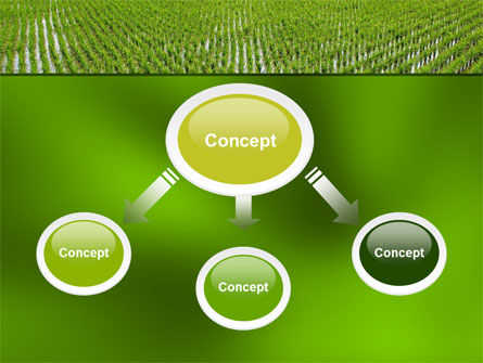 Rice Paddies PowerPoint Template Slide 4