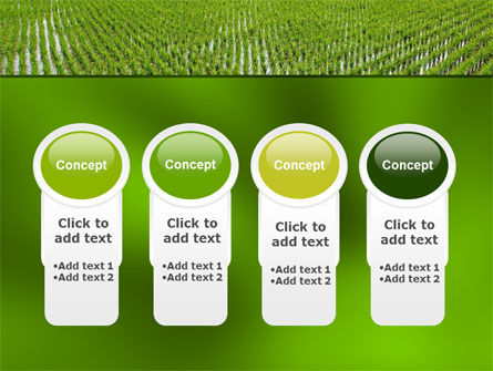 Rice Paddies PowerPoint Template Slide 5