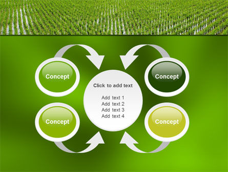 Rice Paddies PowerPoint Template Slide 6