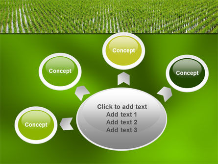 Rice Paddies PowerPoint Template Slide 7