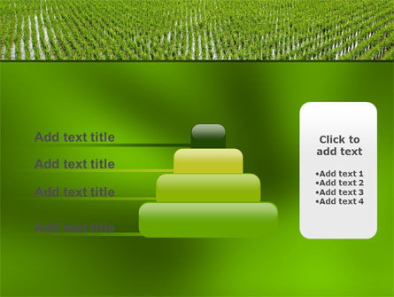Rice Paddies PowerPoint Template Slide 8