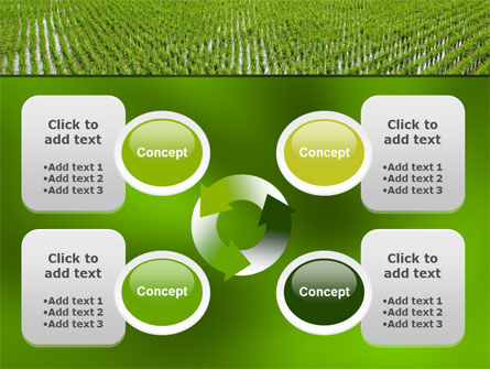 Rice Paddies PowerPoint Template Slide 9