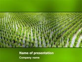 Agriculture: Rice Paddies PowerPoint Template #05325