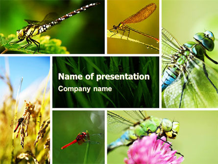 Darning-Needle PowerPoint Template