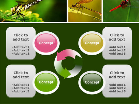 Darning-Needle PowerPoint Template Slide 9