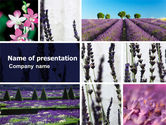 Agriculture: Lavender PowerPoint Template #05380