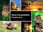 Animals and Pets: Owl Collage PowerPoint Template #05395