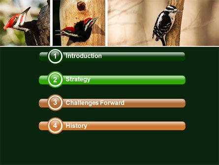 Woodpecker PowerPoint Template, Slide 3, 05405, Animals and Pets — PoweredTemplate.com
