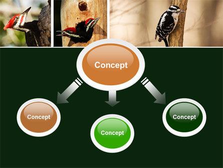 Woodpecker PowerPoint Template, Slide 4, 05405, Animals and Pets — PoweredTemplate.com