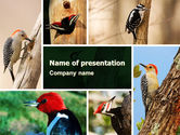 Animals and Pets: Woodpecker PowerPoint Template #05405