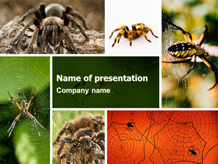 Spider Collage Free PowerPoint Template, 05410, Animals and Pets — PoweredTemplate.com