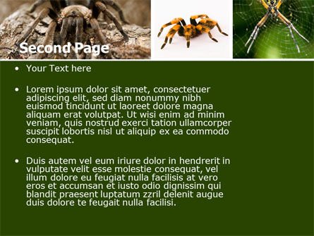 Spider Collage Free PowerPoint Template, Slide 2, 05410, Animals and Pets — PoweredTemplate.com