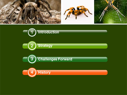 Spider Collage Free PowerPoint Template, Slide 3, 05410, Animals and Pets — PoweredTemplate.com