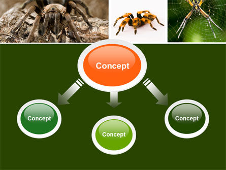 Spider Collage Free PowerPoint Template, Slide 4, 05410, Animals and Pets — PoweredTemplate.com