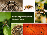 Animals and Pets: Spider Collage Free PowerPoint Template #05410