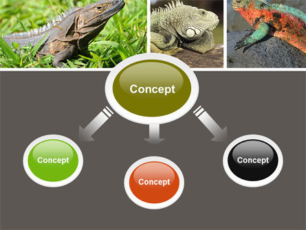 Iguana PowerPoint Template, Slide 4, 05414, Animals and Pets — PoweredTemplate.com