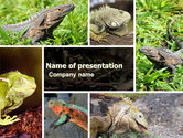 Animals and Pets: Iguana PowerPoint Template #05414