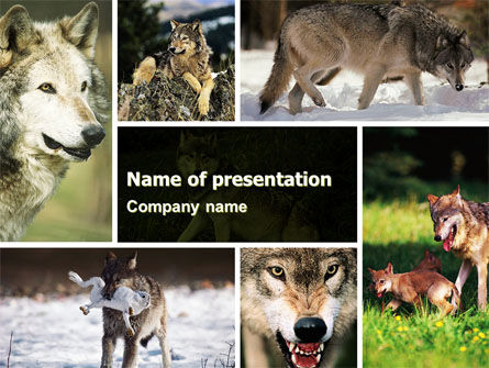 Animals and Pets: Wolf PowerPoint Template #05439